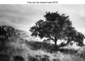 2019-03 Foto van de Maand Maart 2019 Paula .jpg