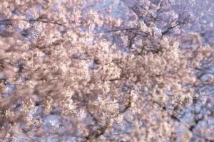 Monet Gerie-3.jpg