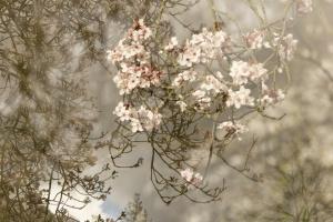 Monet Gerie-4.jpg