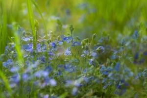 Monet Gerie-6.jpg