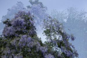 Monet Gerie-7.jpg