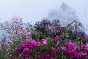 Monet Gerie-8.jpg