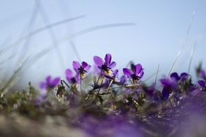 Monet Gerie-9.jpg