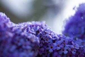 Monet Gerie-10.jpg