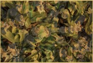 Dorien-6-fantasy vetplantje.jpg