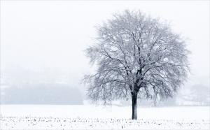 winters 5.jpg