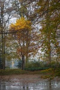 Het park rond Schaep en Burgh 01