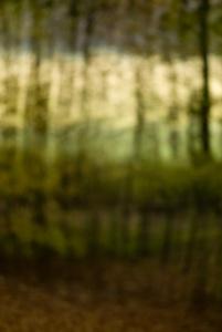 Bos van Bredius in de herfst 01
