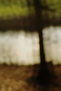 Bos van Bredius in de herfst 02