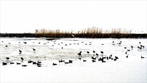 vogels ijs grafisch.jpg