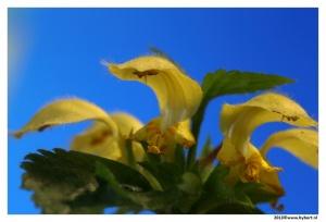 bloemen (4).JPG