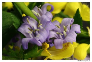 bloemen (58).JPG